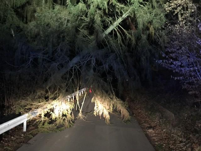 Baum auf Fahrbahn